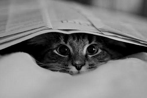 Sneak attack...: Kitty Cat, Cat Eye, Kittens, Peekaboo, Weights Loss, Peek A Boo, Crazy Eye, Baby Cat, Animal