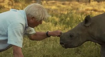 23 Baby Rhinos That Will Make You Impossibly Happy