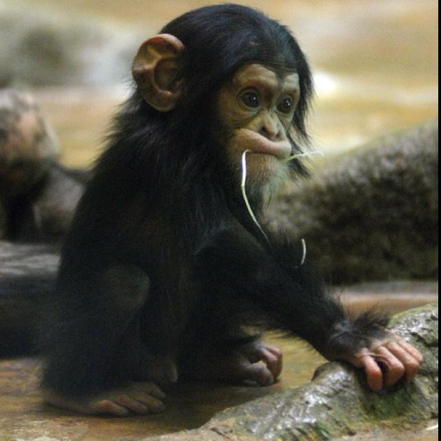 love animals monkey in - photo #16