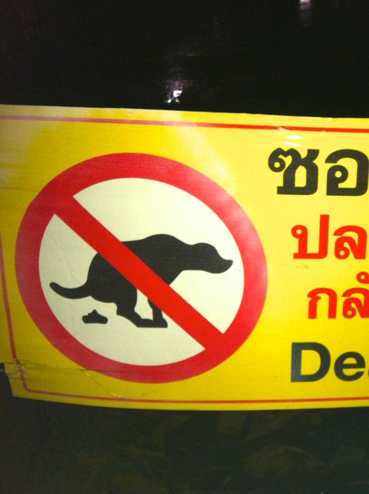 ???  #Thailand #ChiangMai #dogs