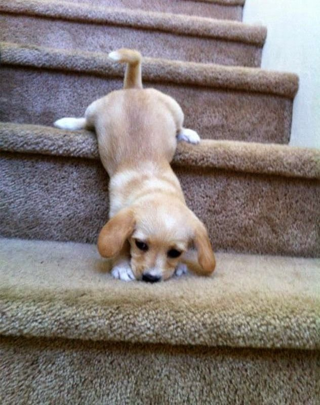 Top 10 Most Amazing Dog Training Tips