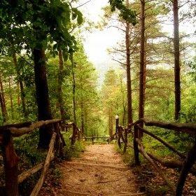 ünye kent ormanı