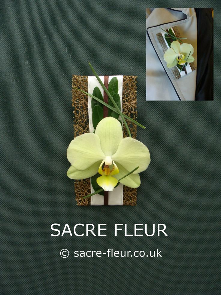 Contemporary Phalaenopsis lapel corsage, in a greeny, yellowy cream, with Box and Pine needles.