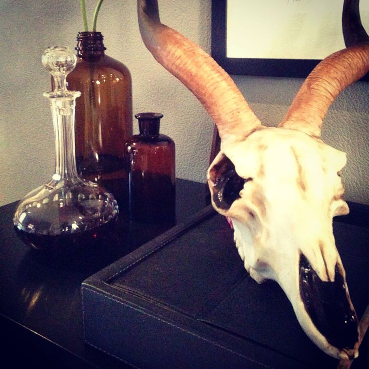 Animal scull and old bottles - stillife
