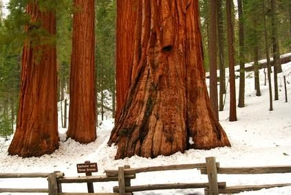 Where to Stay When Visiting the Redwoods in California