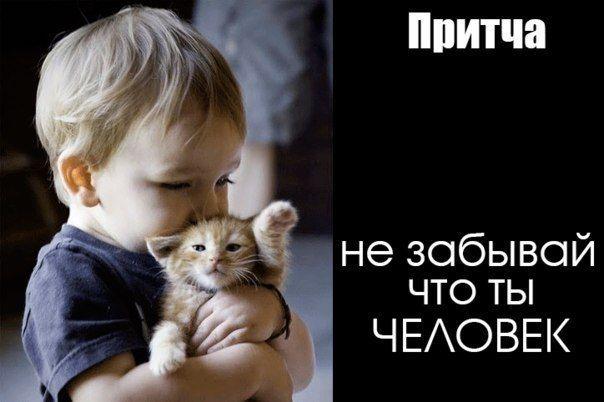 http://m.vk.com/wall-54490971_9062