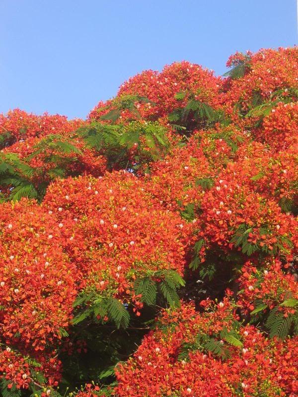 Rboles ostentosos la belleza de los arboles arbustos for Arboles jardineria
