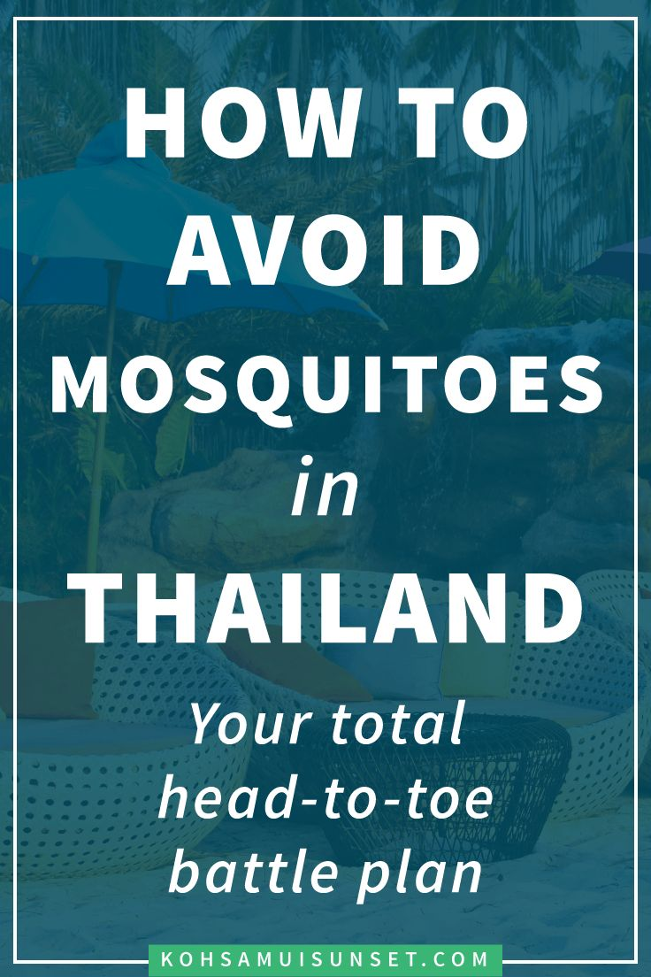 Mosquitoes in Thailand: How to avoid Thai mosquitoes, FAQs and tips for staying safe – Mosquitoes in Thailand are a big question, but protecting yourself is easy. Learn how to stay safe and avoid mosquitoes in Thailand with these simple tips. Click through to read more: http://www.kohsamuisunset.com/mosquitoes-in-thailand/ via @kohsamuiguide