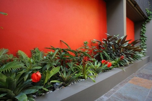 Bold Birchgrove courtyard by Secret Gardens of Sydney  This project shows what a terrific impact a bold colour can have on a small space. In summer this courtyard garden is ideal as it is shaded by buildings and towering trees, while in the cooler months the bright orange feature wall creates a feeling of warmth and vibrancy. The feature wall colour also inspired the plant selections, with orange and red flowers the dominant theme