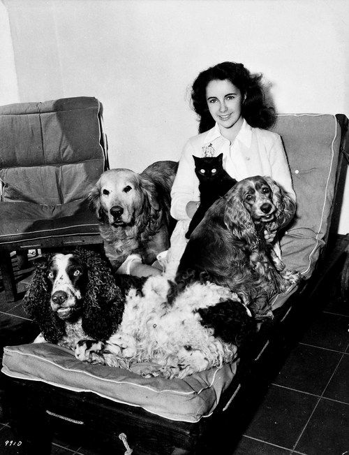 Elizabeth Taylor, three dogs and a cat relaxing at home. #elizabethtaylor www.OneMorePress.com