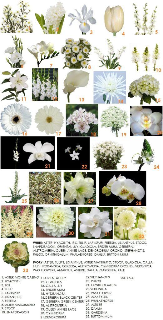 Tipos de flores en blanco Modern Petals Blog