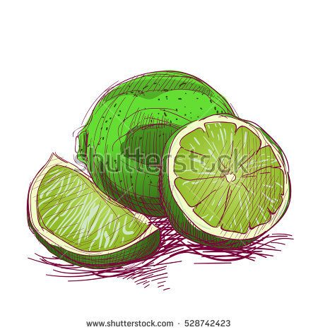 Limes are hand-drawn. Vector color illustration of the fruit.