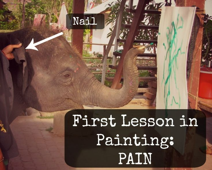 You Can't Spell Elephant Painting Without Pain!  Don't share elephants painting videos!