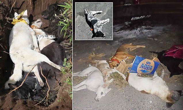 Dead dogs pile up in the streets of Bali #DailyMail