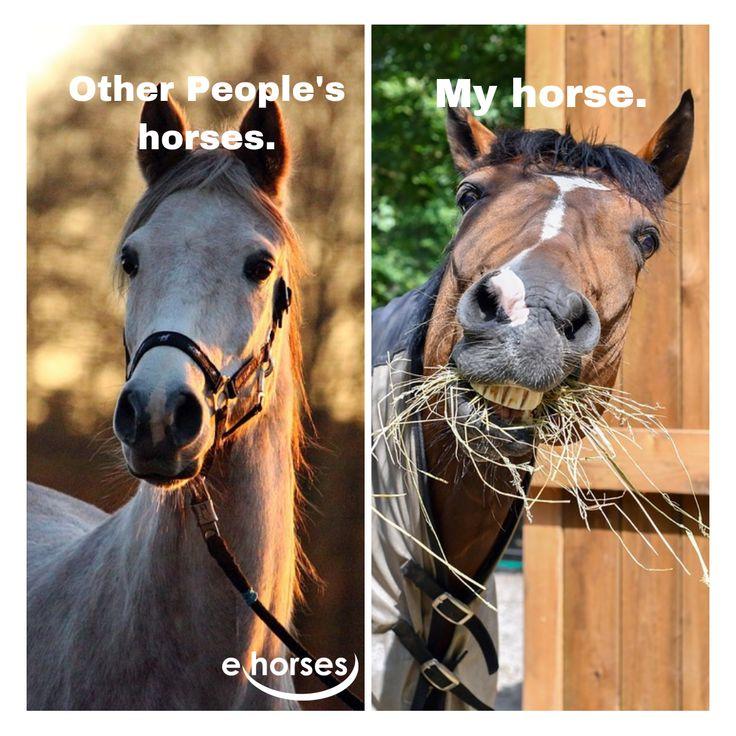 Pferde Fun