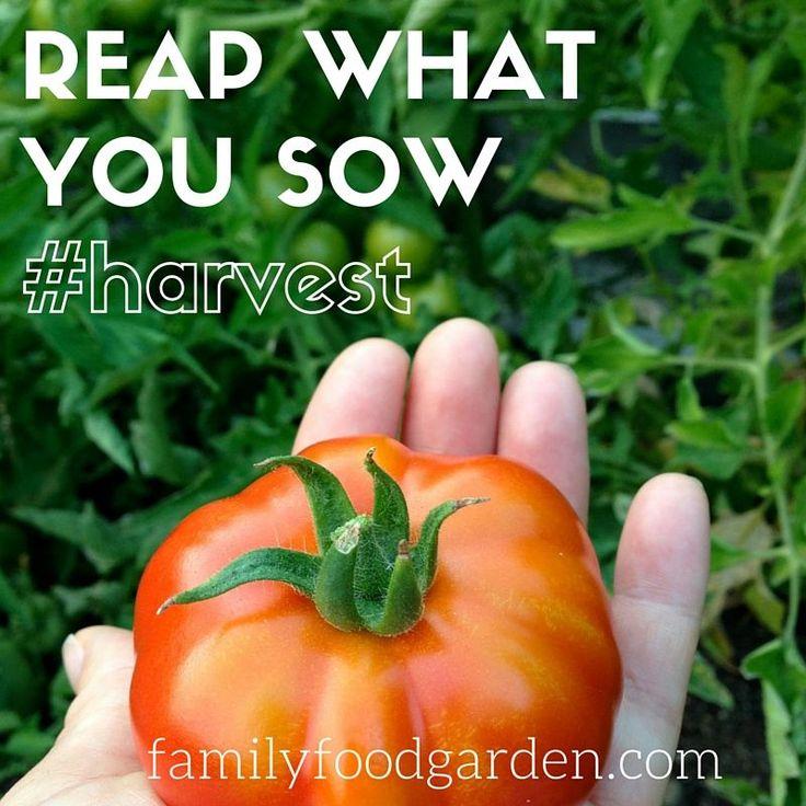 Garden Better: Reap what you Sow