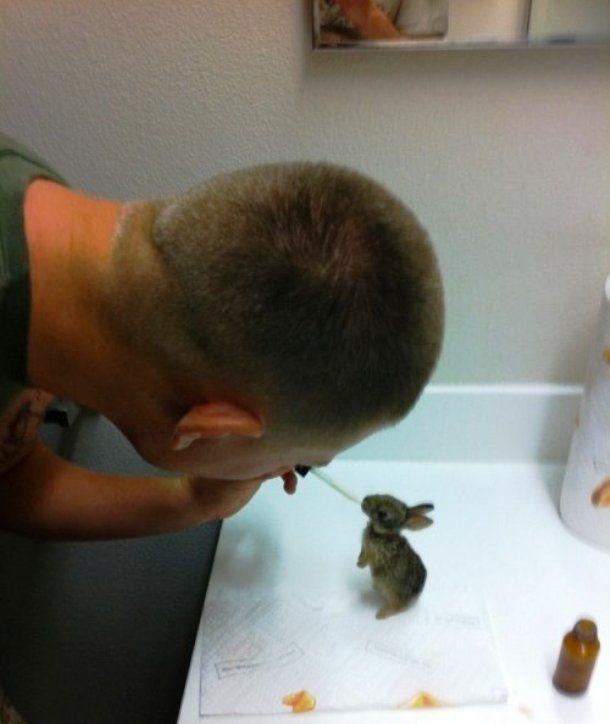 Josua Bisnar é um paramédico de combate que, aqui, está utilizando seus conhecimentos para ajudar um indefeso coelhinho que encontrou perto de sua mãe, que estava morta.