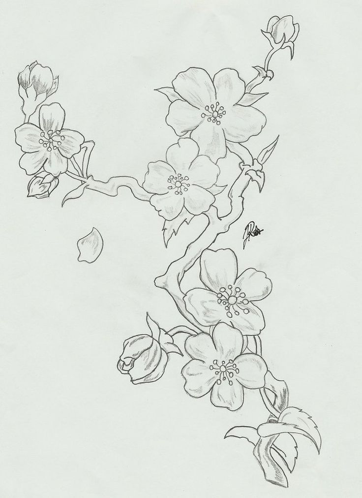 black and white cherry blossom tattoo designs - Google Search