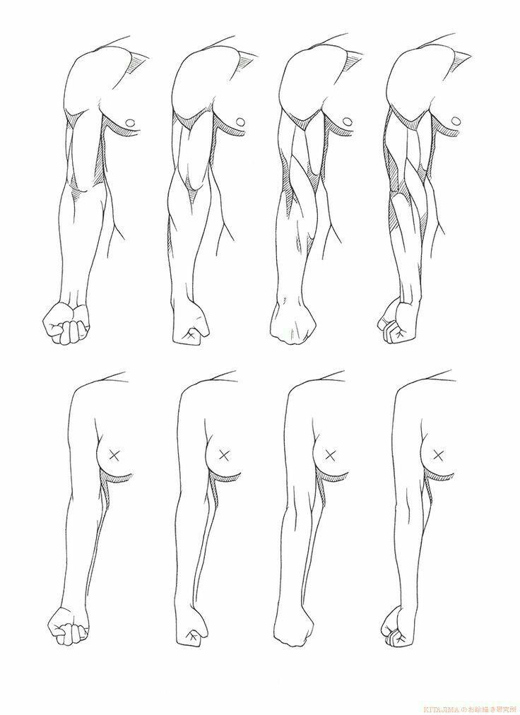 Pin By Buddy Bud On Human Anatomy Drawings Art Art Reference
