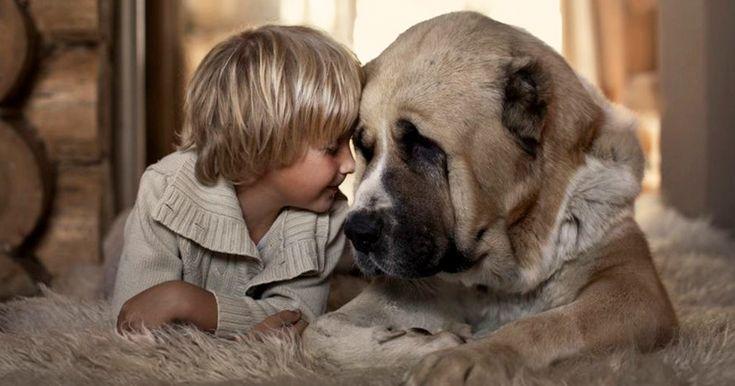 Those Big Russian Furry Dogs