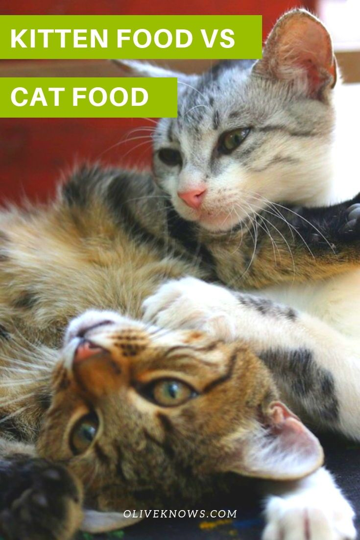Kitten Food Vs Cat Food Do You Know The Differences Oliveknows Kitten Food Sick Cat Cats
