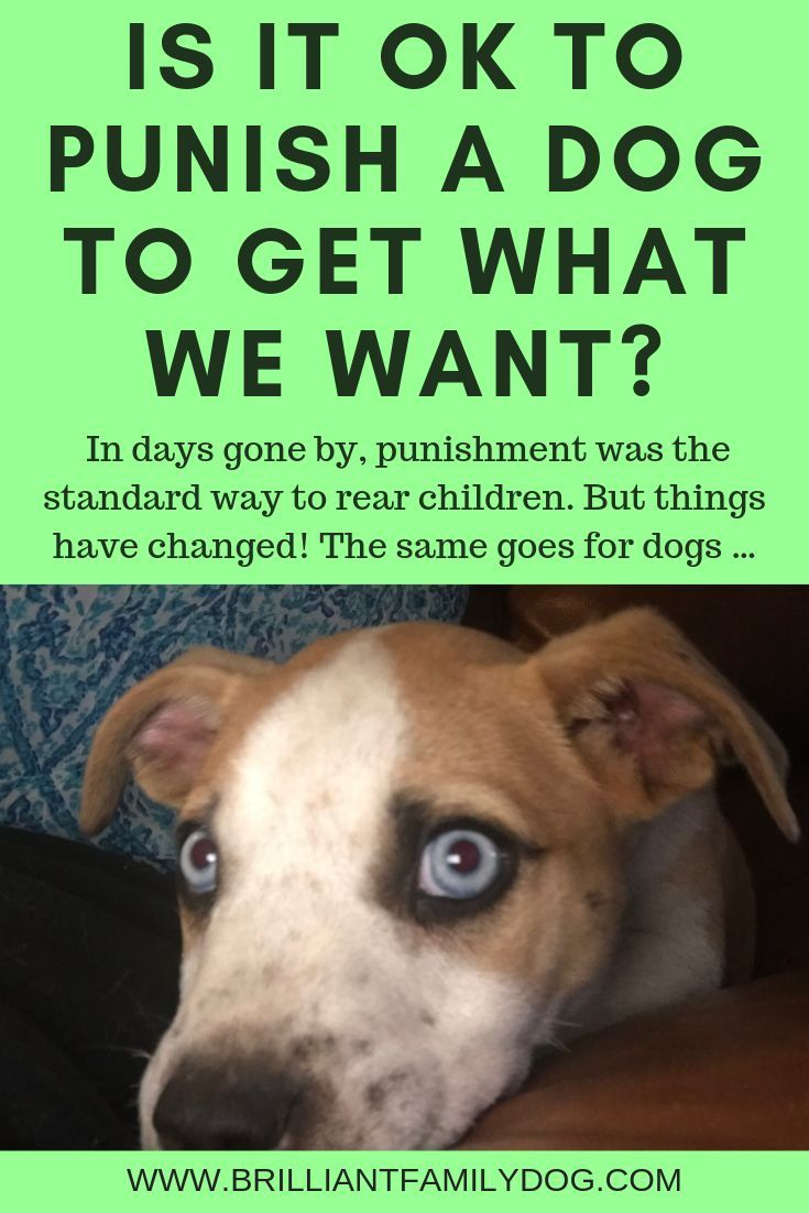 It S Ok To Punish A Dog To Get What We Want Dog Training Dogs