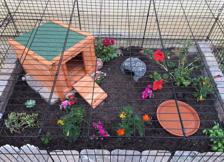 Make a tortoise enclosure in a dog crate! #DIY - PetDIYs.com