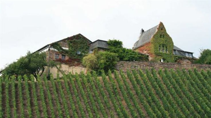 luxembursko-vinice_04-clanokW.jpg (825×463)