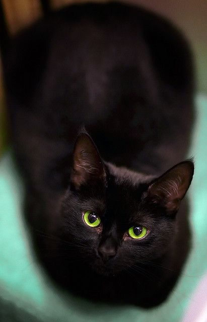 green eyed cat #black-cat #painting #cat