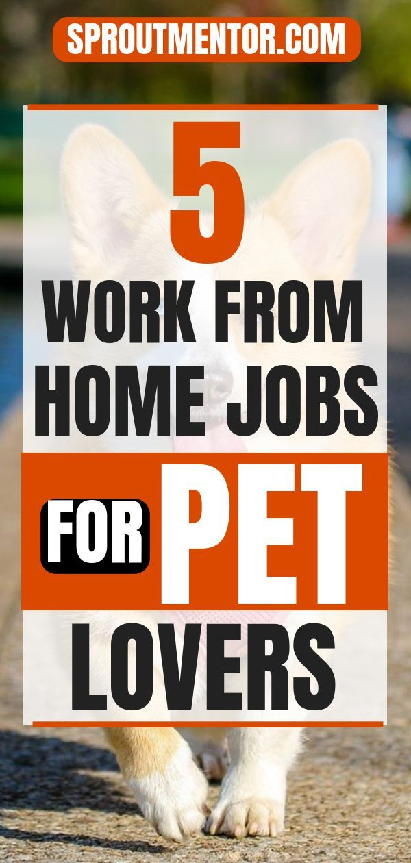 5 Of The Best Work From Home Jobs For Pet Lovers Work From Home Jobs Home Jobs Making Extra Cash
