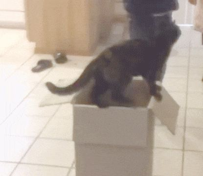 Cat GIF Central — I'm Taking You with Me
