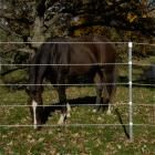 Electric Fencing and Netting for Horses - Premier1Supplies