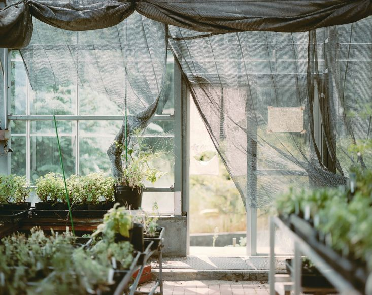 Agricultural fabric creates a romantic mood while filtering light through the windows of a greenhouse.
