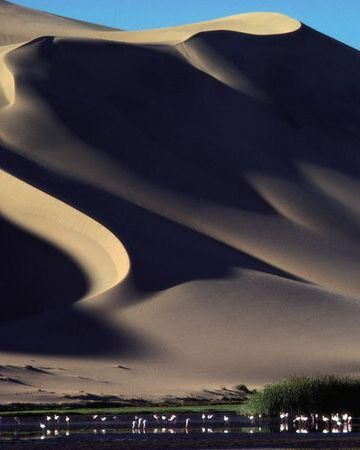 Sand dunes tower over a desert oasis in Namibia. Photograph by Annie Griffiths Belt