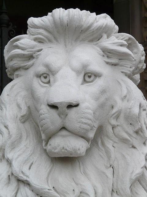 114 Best Images About Ref Lions On Pinterest A Lion