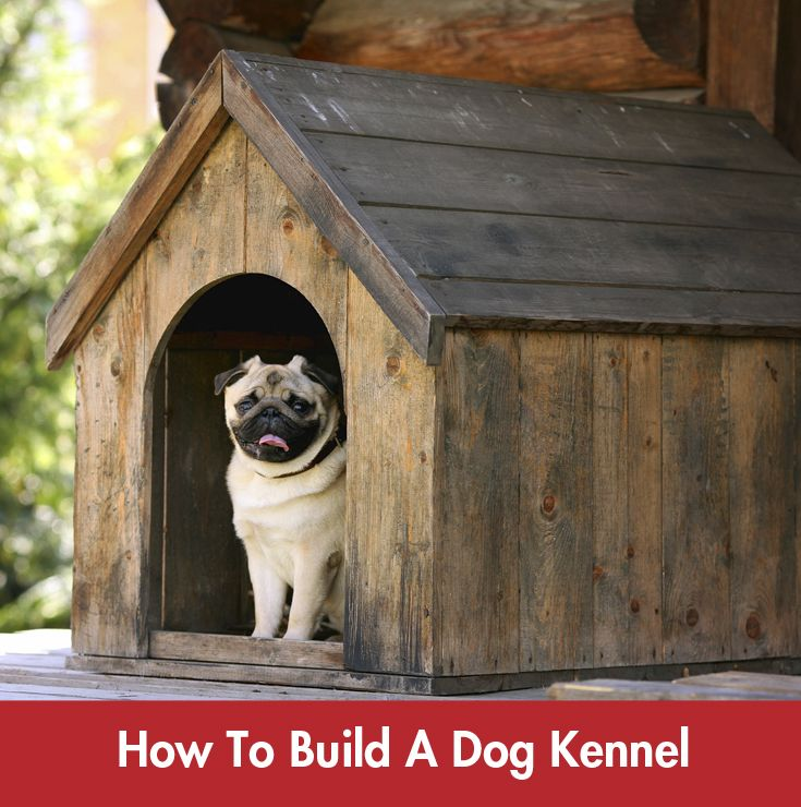 Build a backyard home for your pooch! #Summer #DIY