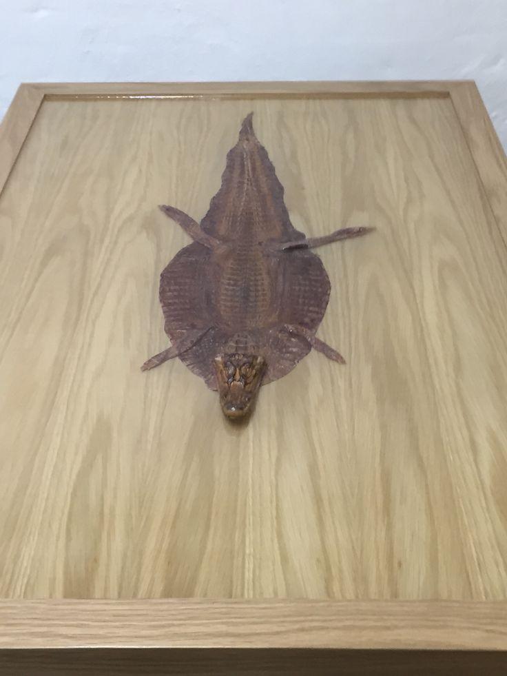 Alligator table