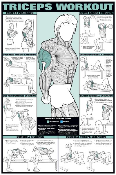 Triceps and Biceps – Youssef Hassan