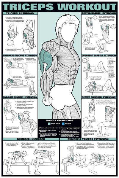 Triceps Workouts [ Waterbabiesbikini.com ] #BodyBuilding #bikini #elegance