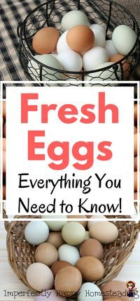 Fresh Eggs - Everything You Need to Know! How to clean, store and the determine freshness of the eggs from your homestead or backyard hens.