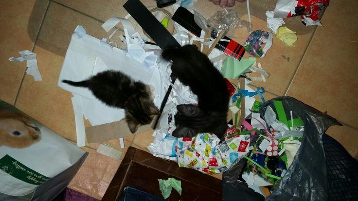 The little buggars found my recycling bin lol