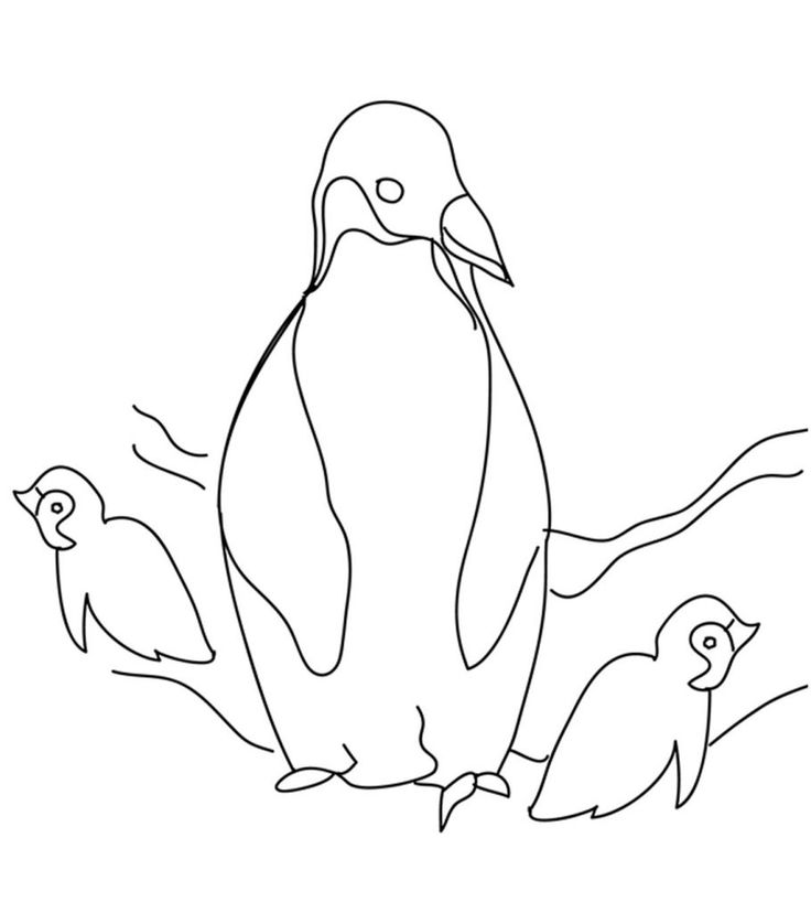 Christmas Penguin Coloring Pages Cute Colouring Sheets
