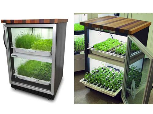 No garden space? Bad at watering plants? This hydroponic garden will do it all for you