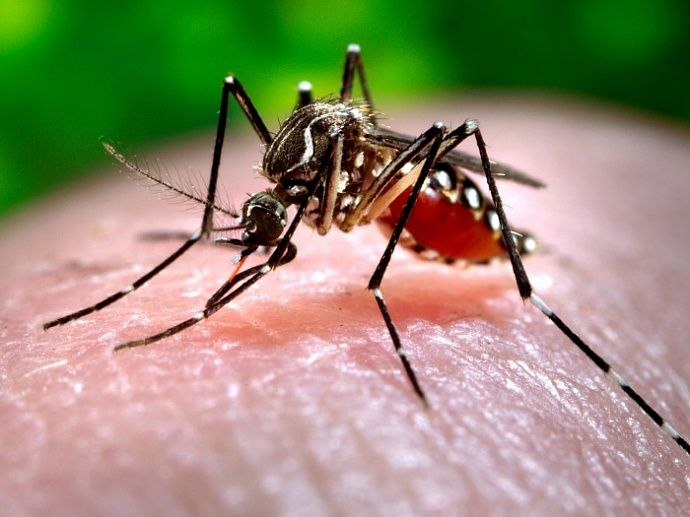Новый случай заболевания россиянином вирусом Зика