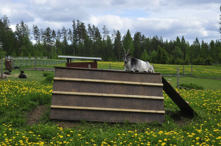 This is summer in Finland - take it easy like goats do.