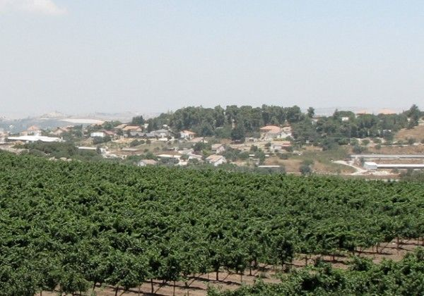 Dalton Winery in Israel: Favorite Places, Dalton Winery, Dalont Winery, Biblical Mentions, Israel And, Kosher Foods