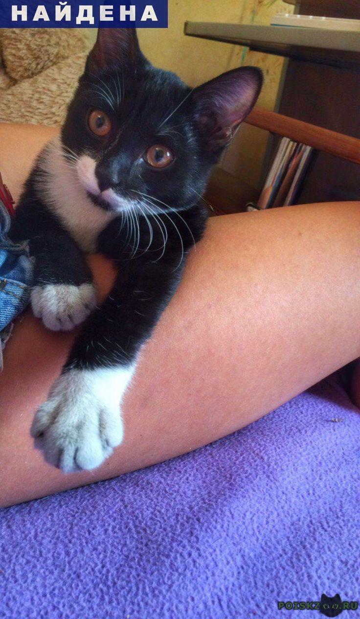 Найдена кошка г.Томск http://poiskzoo.ru/board/read31133.html  POISKZOO.RU/31133 ищем ХОРОШИХ ХОЗЯЕВ для двух котеек! У себя оставить не можем, нас уже есть кот + живет собака в квартире! Обе девочки, Черная(мы зовем ее Мурка), очень ручная, разговорчивая, и безумно любит ласку, урчит как маленький трактор, вчера подбросили в подъезд, хотели хотя бы вынести ей еды, но эта хитрюга, как только открыли дверь в квартиру, сразу влетела во внутрь, конечно не выгнали обратно))На вид ей .. месяца…