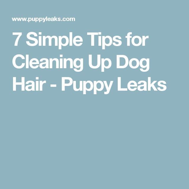 1000 Ideas About Cleaning Dog Hair On Pinterest Remove