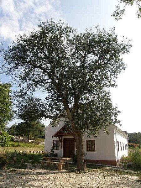 Farmhouse in Hungary (Múltidéző Porta, Szalafő,Papszer-Puszta)