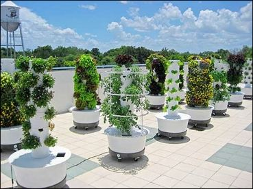 1000 images about Vertical Gardens on Pinterest